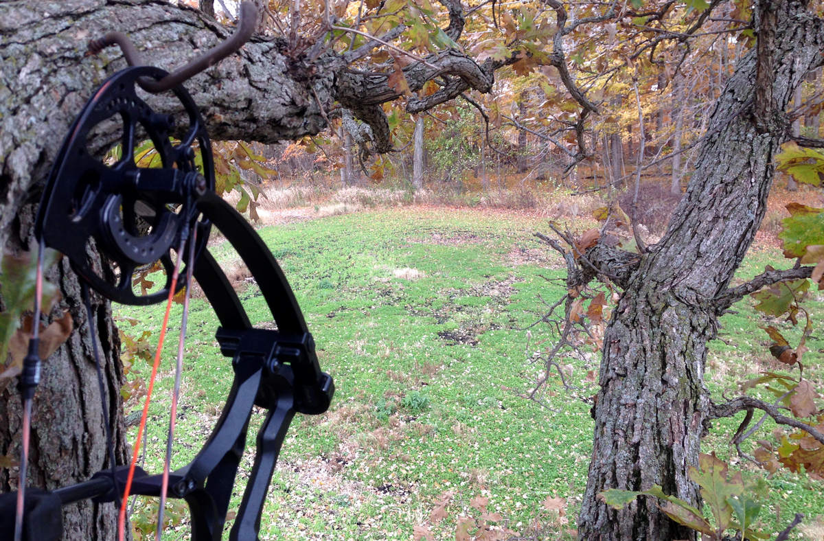 A black compound bow hanging on a bow hook screwed into a tree on the edge of a fall food plot.
