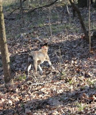 httpswww.outdoorlife.comsitesoutdoorlife.comfilesimport2013images2011028_Dixie_on_the_run_0.jpg