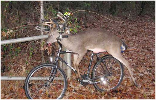 Wheel the deer out.