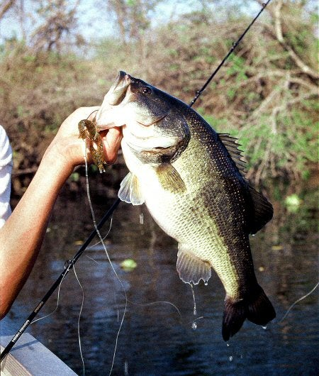 11 Great Spring Fishing Rigs