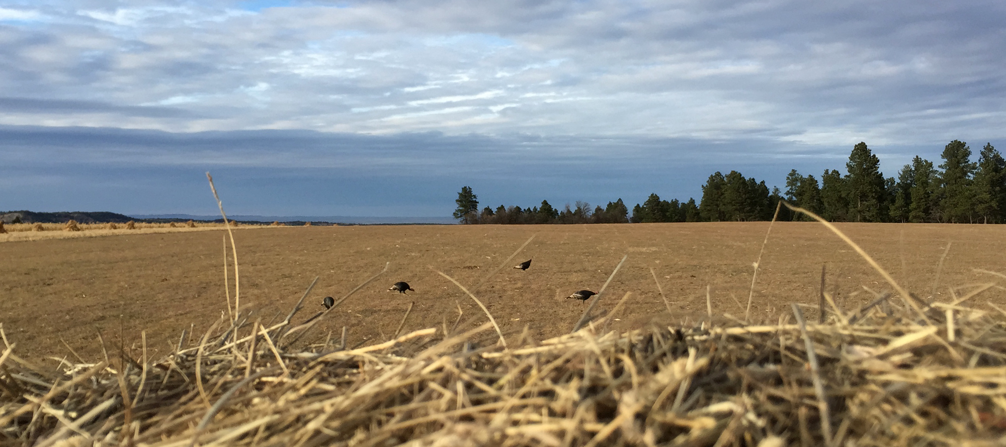 GPS Research Confirms It: Spring Gobblers Like to Show Off