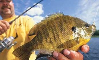 Five Simple Panfish Recipes