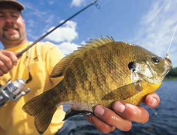 How to Clean a Panfish