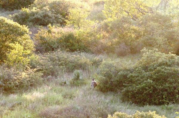 httpswww.outdoorlife.comsitesoutdoorlife.comfilesimport2014importImage2010photo30010FordRanch_061.jpg