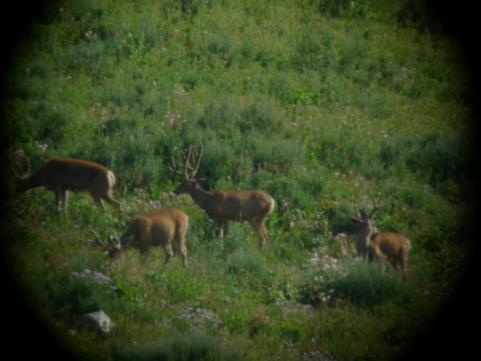 Day 1: Scouting For Muleys