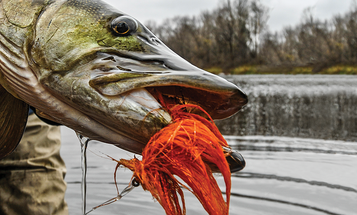 Fishing Tips: 4 Different Sandy Spots Where You'll Find Muskies