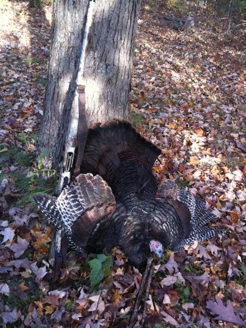 Bird Down: Vermont Fall Turkey Opener