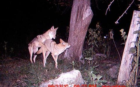 httpswww.outdoorlife.comsitesoutdoorlife.comfilesimport2014importImage2010photo6Windows_Photo_Gallery_Wallpaper.jpg
