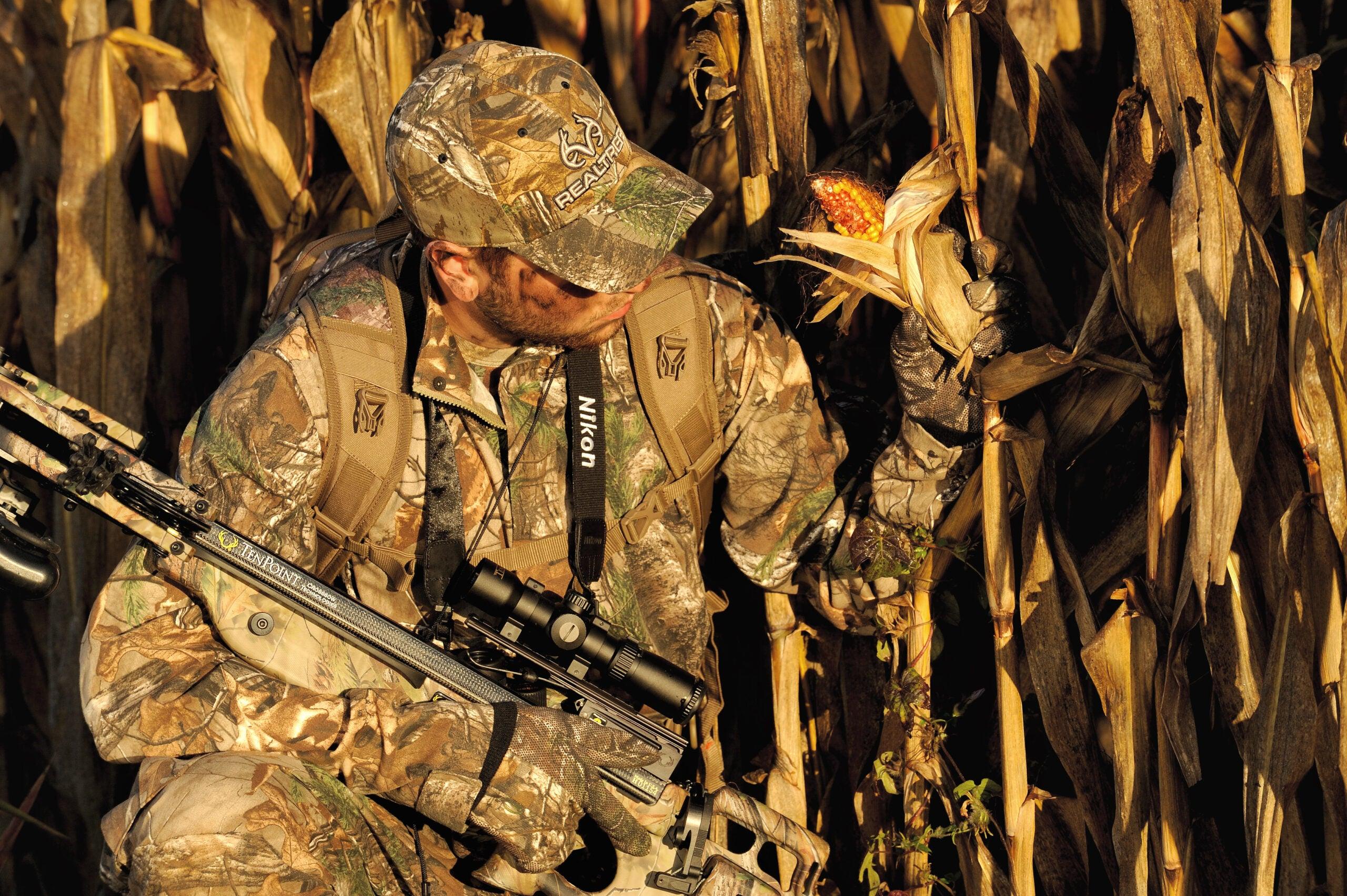 Do Deer Prefer Non-GMO Corn?