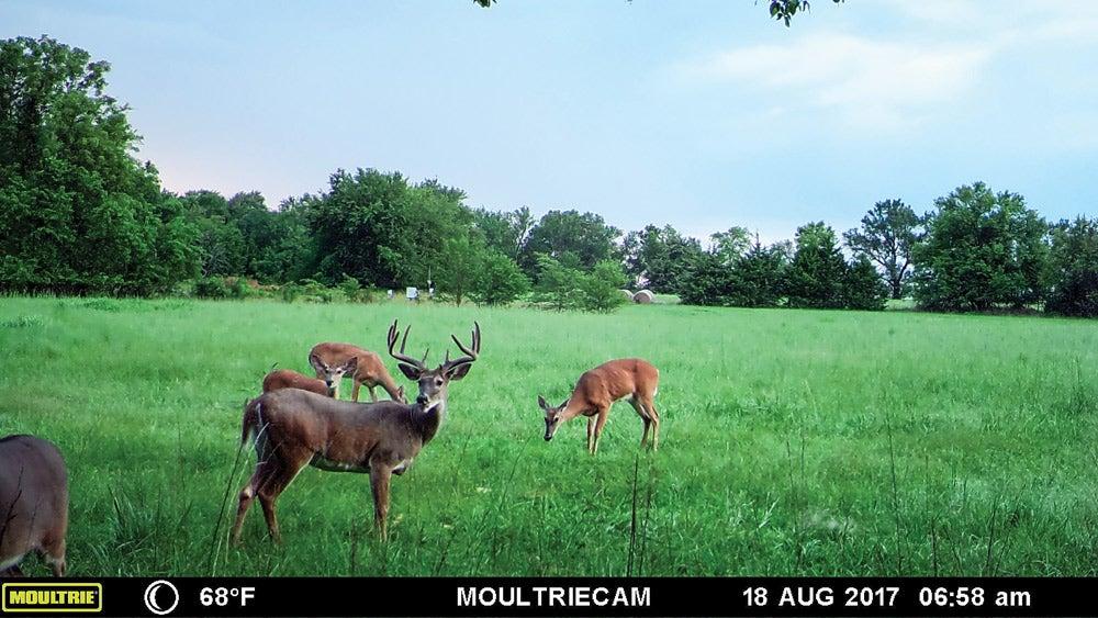 summertime trail cam full velvet buck