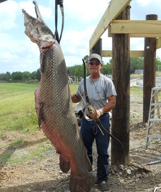 Massive Alligator Gar Shot in Texas Could Have Been a Record