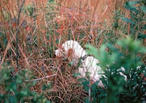 httpswww.outdoorlife.comsitesoutdoorlife.comfilesimport2014importImage2009photo77._Kansas.jpg