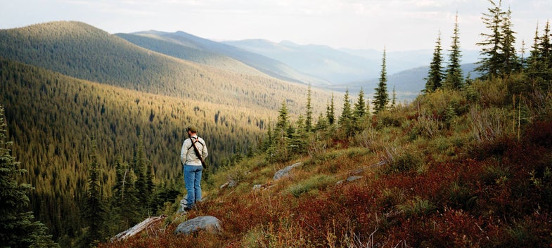 bear hunting on scout ridge