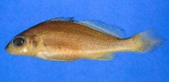 httpswww.outdoorlife.comsitesoutdoorlife.comfilesimport2014importImage2007legacyoutdoorworldslargestcatfish9_Kubi.jpg