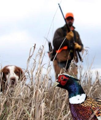 Pheasant Forecast 2010
