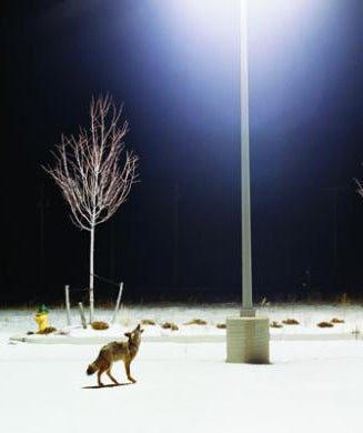 Coyote Hunting Tips: Cutting-Edge Predator Tactics