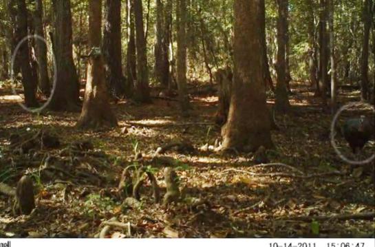 Is Bigfoot a Turkey Hunter?