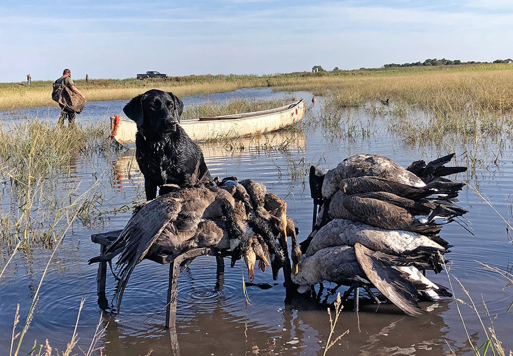 hunting dog next to waterfowl