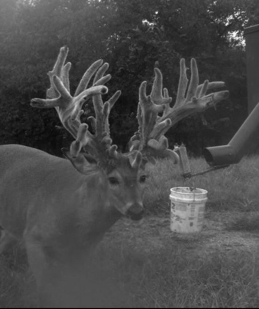Judge This Deer