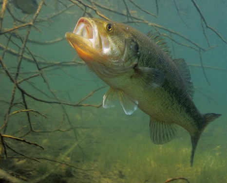 How to Catch Post-Spawn Bass: Baits and Tips from a Texas Guide
