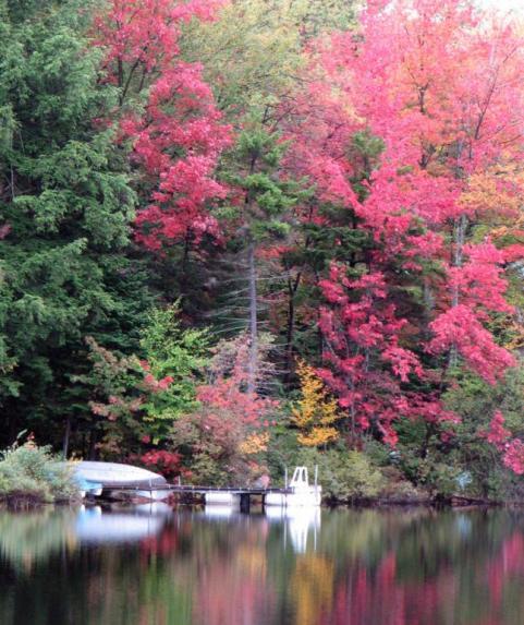 httpswww.outdoorlife.comsitesoutdoorlife.comfilesimport2014importImage2009photo7Decfoliage_54.jpg