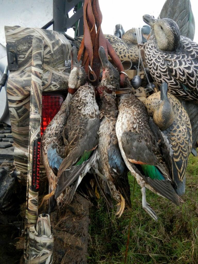 teal hunting texas