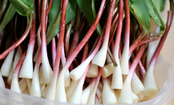 How to Forage for Ramps, and Recipes for Using Them in Wild-Game Cooking