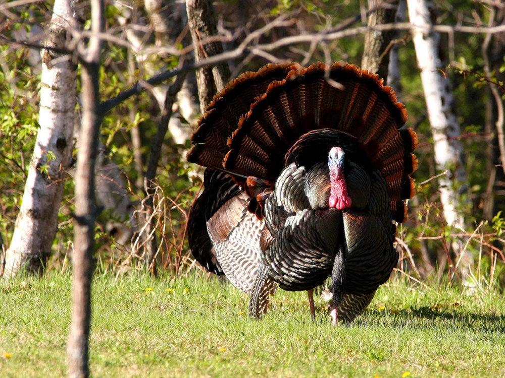 Wisconsin turkey hunting forecast 2018
