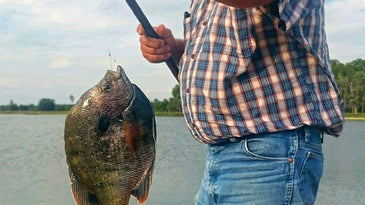 Wayne Shelby fishes a one-pound bluegill