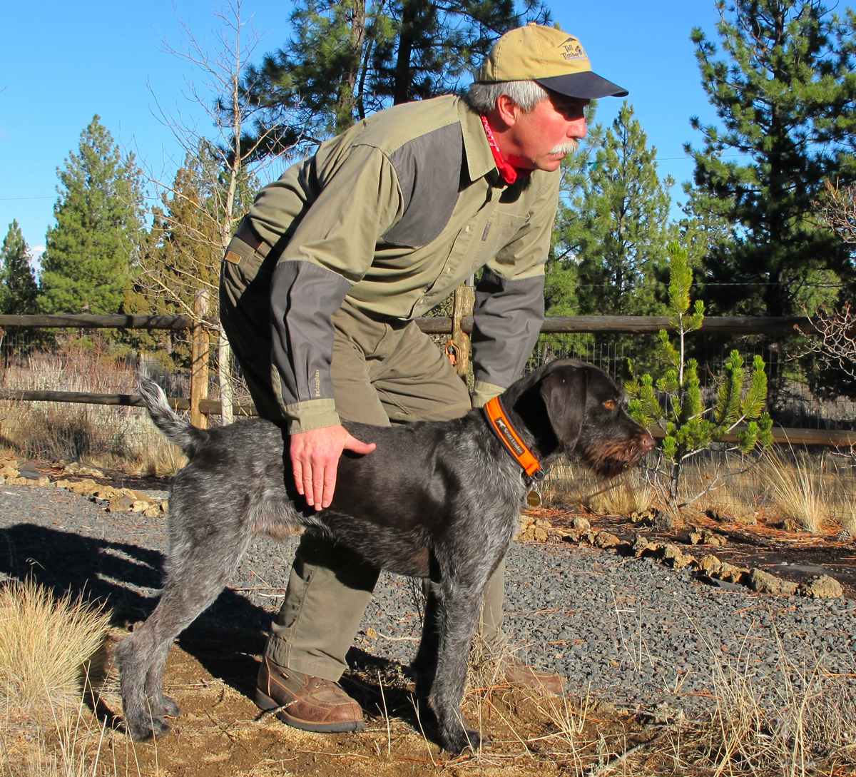 Gun Dog Training Tips: Praise is Not a Release Command