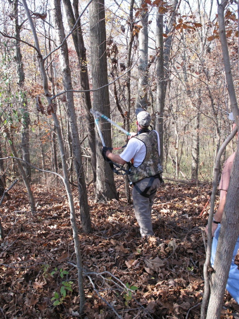 A man in a camo safety harness trims branches from a tree in the woods where leaves carpet the ground.