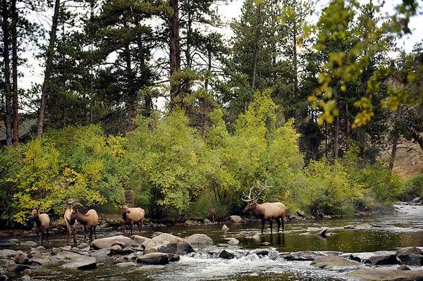 httpswww.outdoorlife.comsitesoutdoorlife.comfilesimport2013images201111elkfishing_07_0.jpg