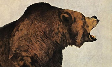 27 Vintage Outdoor Life Bear Covers From 1943 to 1970