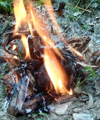 Fire Building: How to Find the Best Tinder in Survival Situations