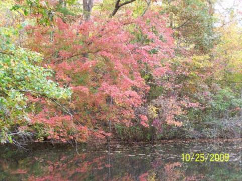 httpswww.outdoorlife.comsitesoutdoorlife.comfilesimport2014importImage2009photo7Decfoliage_43.jpg