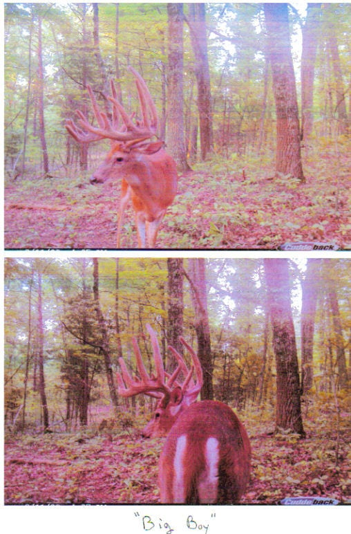 httpswww.outdoorlife.comsitesoutdoorlife.comfilesimport2014importImage2010photo30010Restitution_Deer_pics_1.jpg