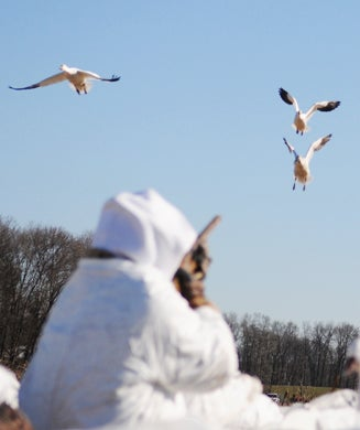 Photos: Hunting The Atlantic Flyway With a Snow Goose Addict