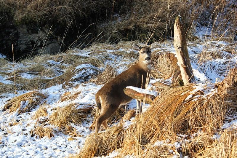 httpswww.outdoorlife.comsitesoutdoorlife.comfilesimport2013images20120126.jpg