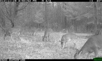 Rut Tracker: Trail Camera Photos of Recent Rut Activity