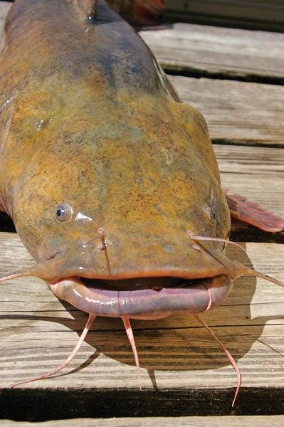 httpswww.outdoorlife.comsitesoutdoorlife.comfilesimport2013images201203catchbiggestfish_05.jpg