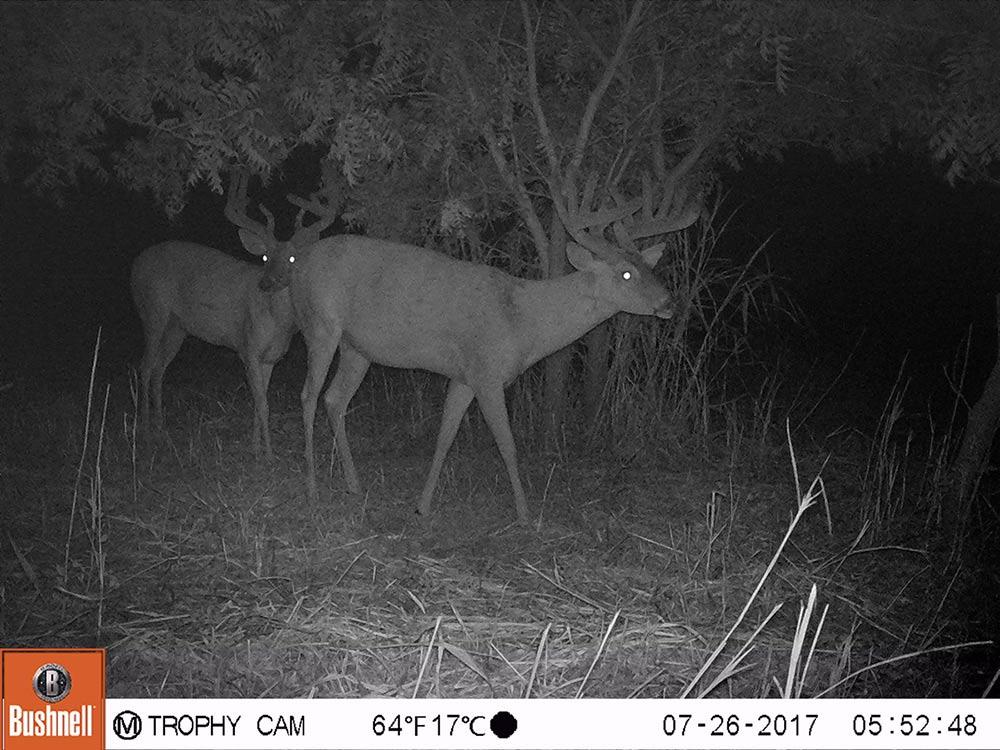 Trail Camera Footage Kansas/Oklahoma