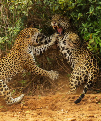 Best Nature Photos: 2013 Wildlife Photographer of the Year Competition Winners