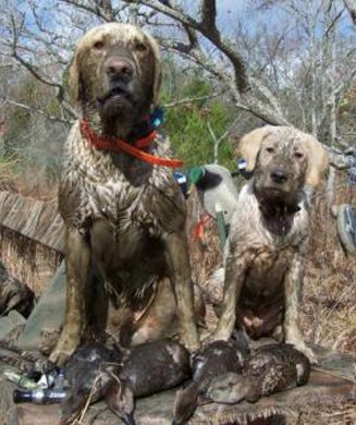 Gun Dogs: Best Reader Dog Photos