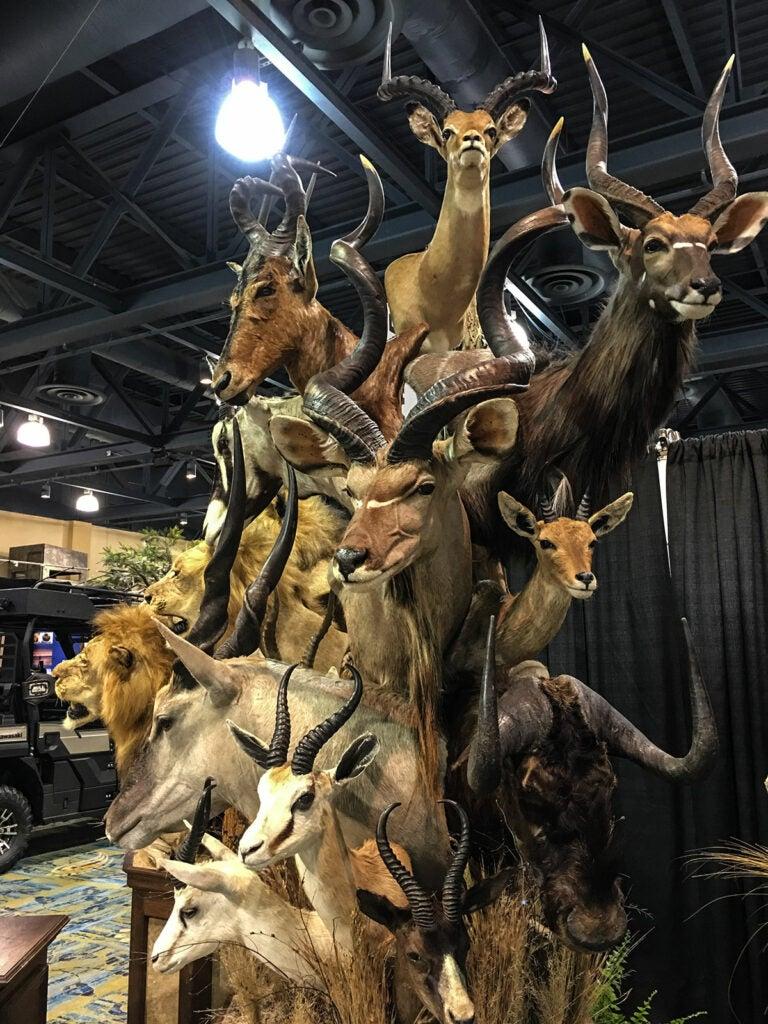 savannah mounts