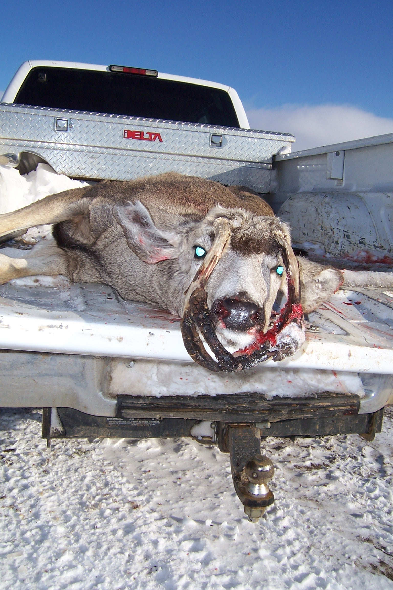 Deformed Whitetail Deer Mystery