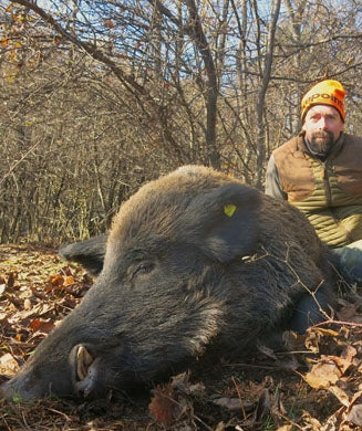 A Drive Hunt for Bulgarian Boars