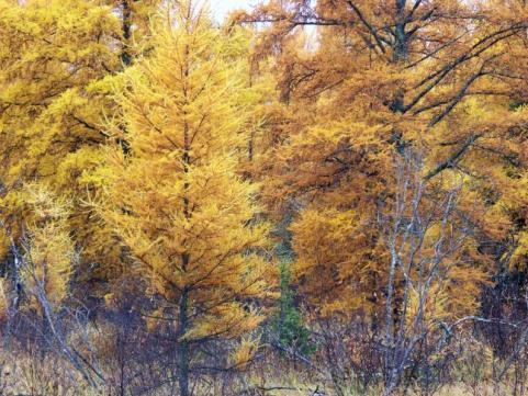 httpswww.outdoorlife.comsitesoutdoorlife.comfilesimport2014importImage2009photo7Decfoliage_60.jpeg