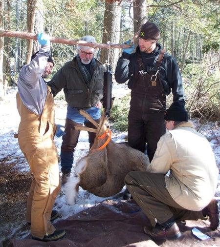 httpswww.outdoorlife.comsitesoutdoorlife.comfilesimport2014importImage2011photo100132157942_Deer01_HS.jpg