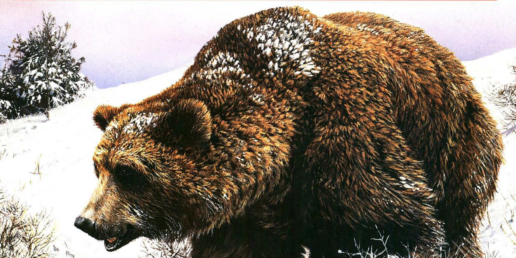 27 Outdoor Life Bear Covers From 1989–2014