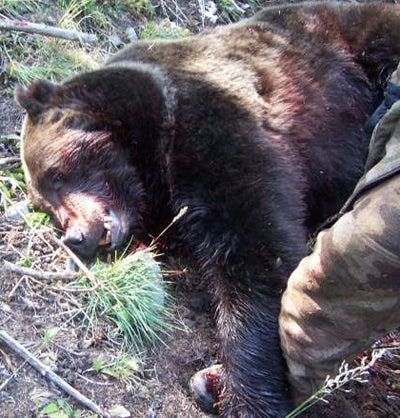 httpswww.outdoorlife.comsitesoutdoorlife.comfilesimport2014importImage2008legacyoutdoorlifebear_attack_03.jpg
